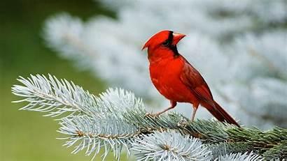 Birds Wallpapers Bird Desktop Background Christmas Pc
