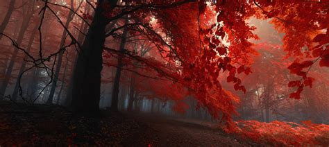 fall trees nature forest red wallpapers hd desktop