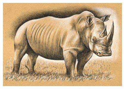 pin  cathy russell  draw doodles   rhino art