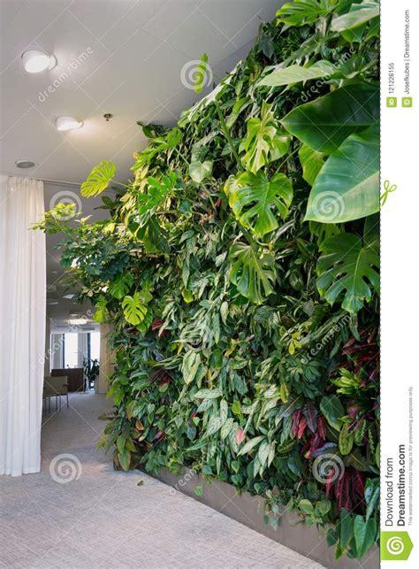 verde verticale interni verde verticale per interni showroom giardini verticali