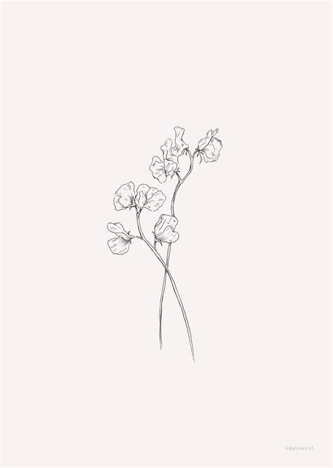 inkylines - Flowers - Sweet pea