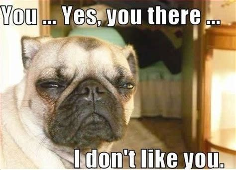 Pug Memes - related keywords suggestions for pug memes