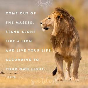 134 best Gentle as a kitty Fierce like a LION images on ...