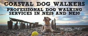 the north shields dog walker reliable north shields dog With looking for a dog walker