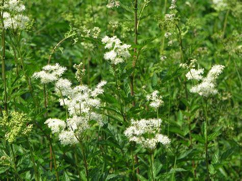 Dodamies pļavā: Nomierinošā un smaržīgā vīgrieze / Raksts ...
