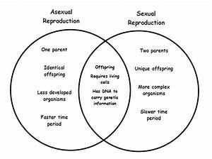 32 Sexual And Asexual Reproduction Venn Diagram