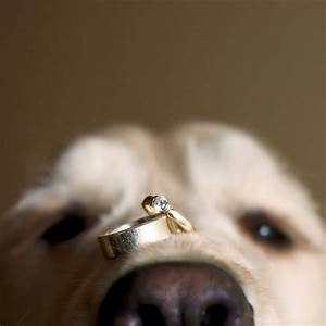 Photo of the day bridalguide for Dog wedding ring