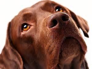 Animal Cruelty ASPCA