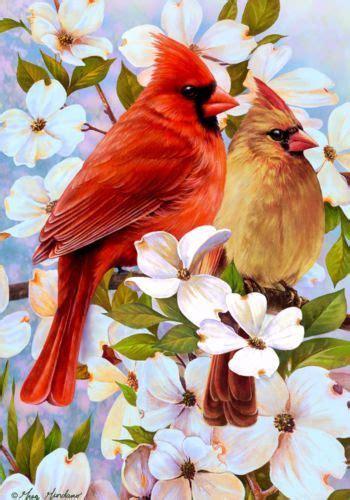 images  kentucky state bird  pinterest