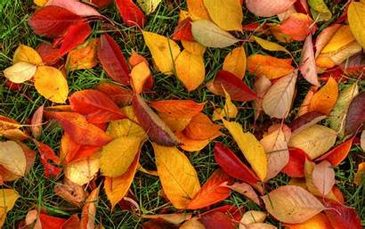 Leaves Autumn 1440 Wallpapers