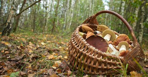 Pilze Im Garten Oktober by Pilze Sammeln Mein Sch 246 Ner Garten