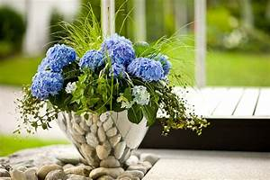 Pflanzen Für Den Schatten : k belpflanzen f r den schatten ~ Sanjose-hotels-ca.com Haus und Dekorationen