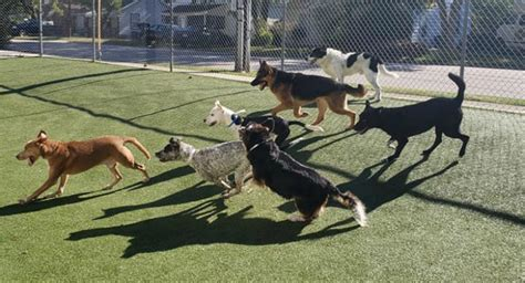 durham nc pet boarding grooming  doggy daycare