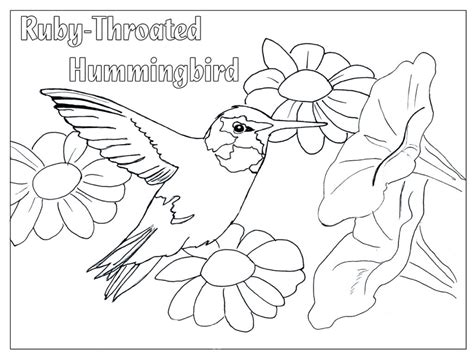 hummingbird coloring pages    print
