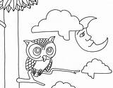 Coloring Night Pages Owl Owls Printable Animals Morning Adult Clipart Drawings Designlooter Popular Remodel Line Animal Library 1240px 1594 6kb sketch template