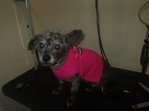 Small Dog Needing Good Home 2 Piece Bedroom Set Condos Myrtle Beach Black Chairs For Paints Walls In Country Style Sets Apartments Miami 3 Hotels Orlando White