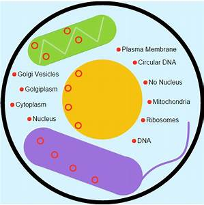 Venn Diagram Between Prokaryotic And Eukaryotic Cells