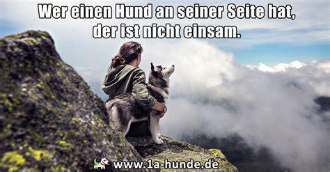 wer braucht einen hund wer einen hund an seiner seite hat der ist nicht einsam