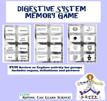 digestive system memory game  middle school frizz tpt