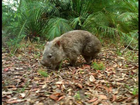 mammals wild animal  blog wild animal  australia
