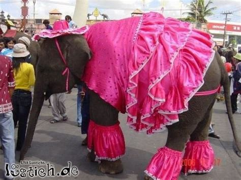rosa elefant bild lustichde
