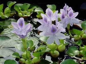 Les Plantes Aquatiques Cap39 Vert