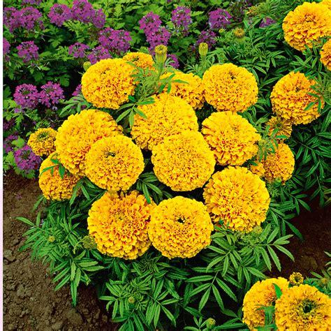 Iecienītāko stādu un sēklu TOP 10 vasaras dārzam | Praktiski.lv