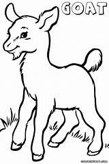 Goat Coloring Pages Mountain Head Drawing Clipart Draw Animal Clipartmag Getdrawings Colorings sketch template