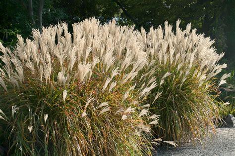 Die 10 Imposantesten Gräser Im Garten  Garten @ Diybookde