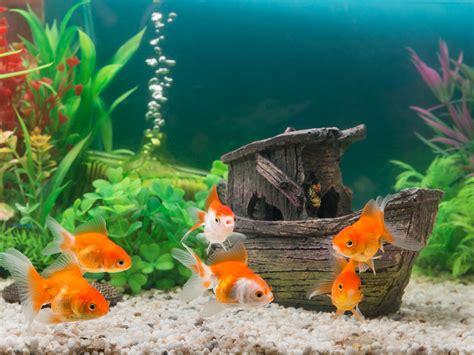 aquarium et calcaire attention poissons en eaux troubles je traite mon eau