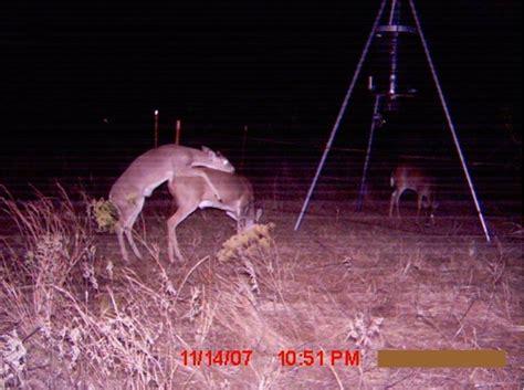 neat game camera  deer management  buck manager