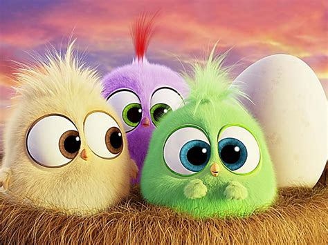 hd wallpaper   hatchlings  angry birds