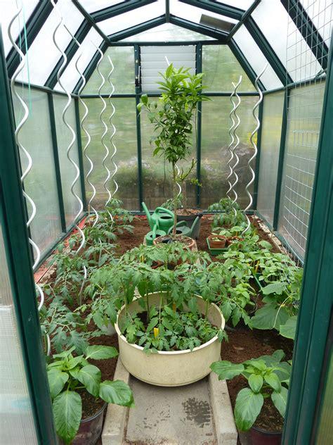 gewaechshaus frisch bepflanzt mit tomaten und vereldelten