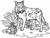 Wolf Coloring Coloriage Loup Chien Animaux Printable Theme 1001 Bestappsforkids Colors Stumble Tweet Tigre Mandala Therecipeworld sketch template