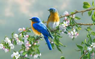 Beautiful Flowers and Birds