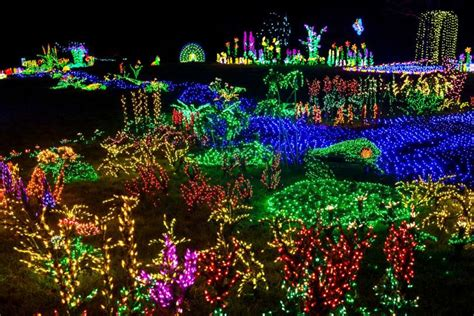 500 000 lights transformed the bellevue botanical