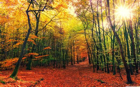 beautiful autumn colors forest path sunny day  hd