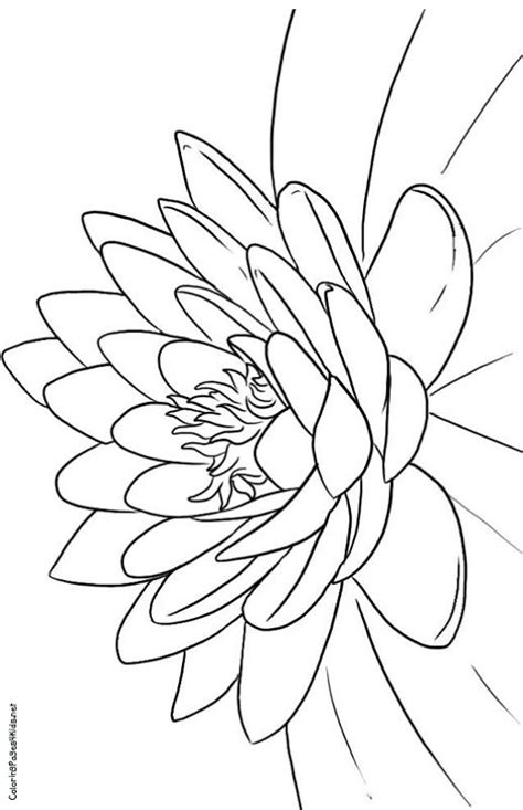Lotus Flower Coloring Pages title= | Coloring pages | Flower coloring pages, Lotus flower colors