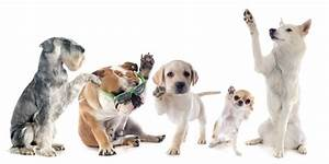 Hundehaltung Mietwohnung 2017 : hundehaltung in der mietwohnung ~ Lizthompson.info Haus und Dekorationen