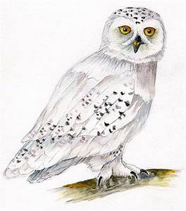 Drawn owl harry potter owl - Pencil and in color drawn owl ...