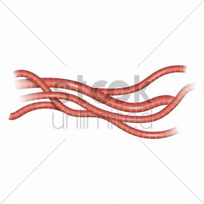 Cardiac Cells Vector Stockunlimited Graphic
