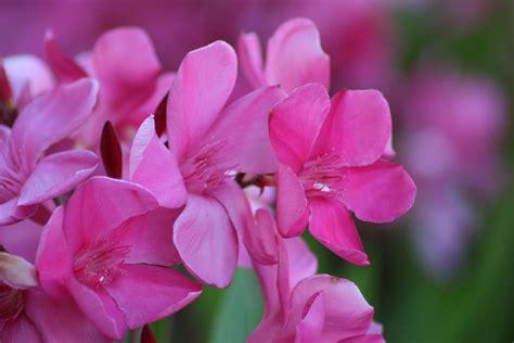 tuin zonder giftige planten giftige bloemen en planten mooi maar dodelijk