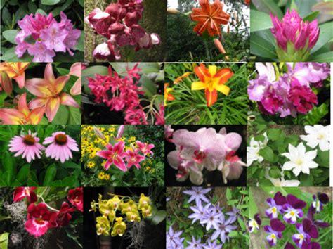 sognare fiori secchi il significato dei fiori scopriamolo insieme