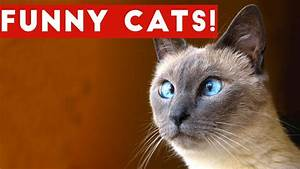 Funny Cats Compilation 2017 | Best Funny Cat Videos Ever ...