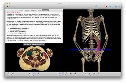 Anatomy Education Dissector Vh Software Undergraduate Lab