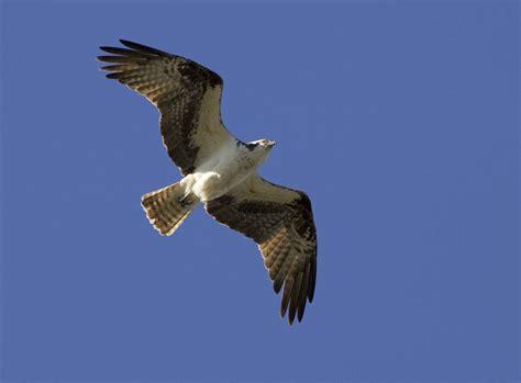 do birds fly at how do birds fly for kids birds in flight birds flight