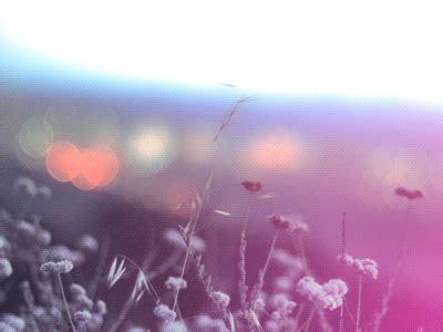 Sexxxxyyyy bokeh bokeh museum gif free download. New trending GIF tagged nature landscape flowers bokeh ...