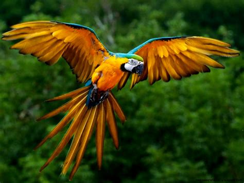 Endangered Animals Wallpapers - endangered rainforest animals wallpapers hd quality
