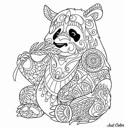 Panda Eating Bamboo Coloring Shoot Pandas Pages