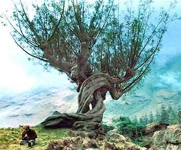 whomping willow    focused   tree harry